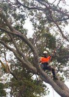 tree-services14