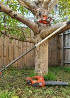 tree-services15