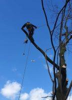 tree-services7